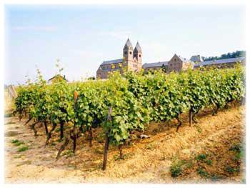 Czech, Moravia Wine
